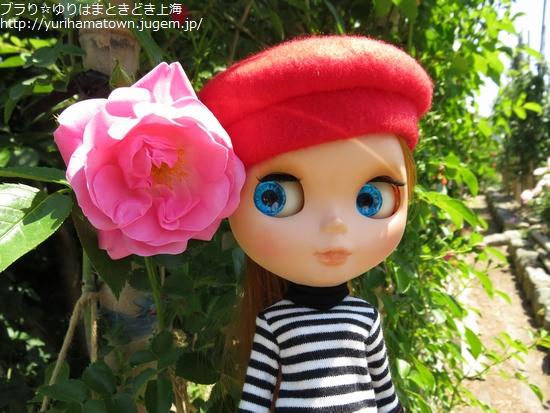 【湯梨浜町】素敵Rose Gardenでうっとりtime