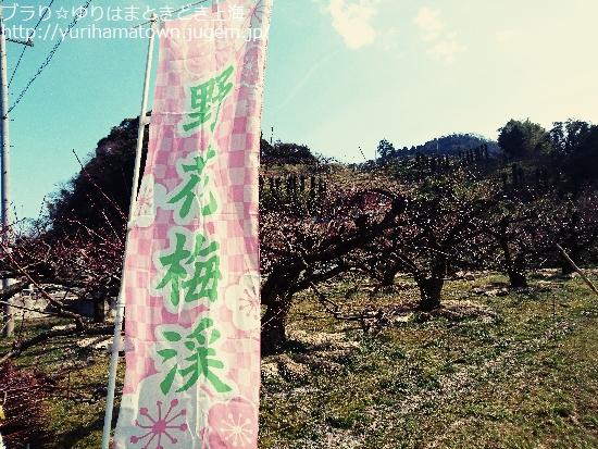 【湯梨浜町】野花豊後の花