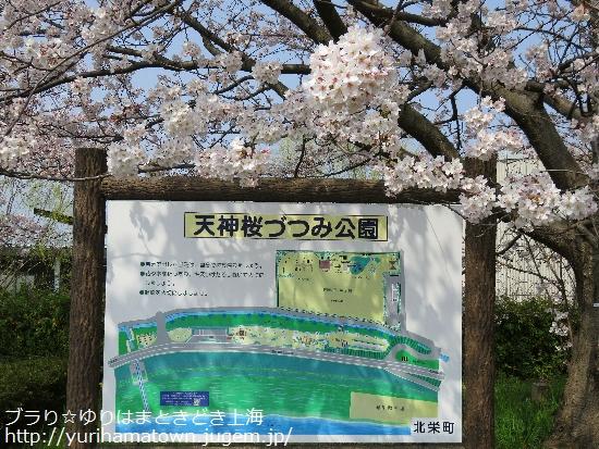 【北栄町】天神桜づつみ公園の桜