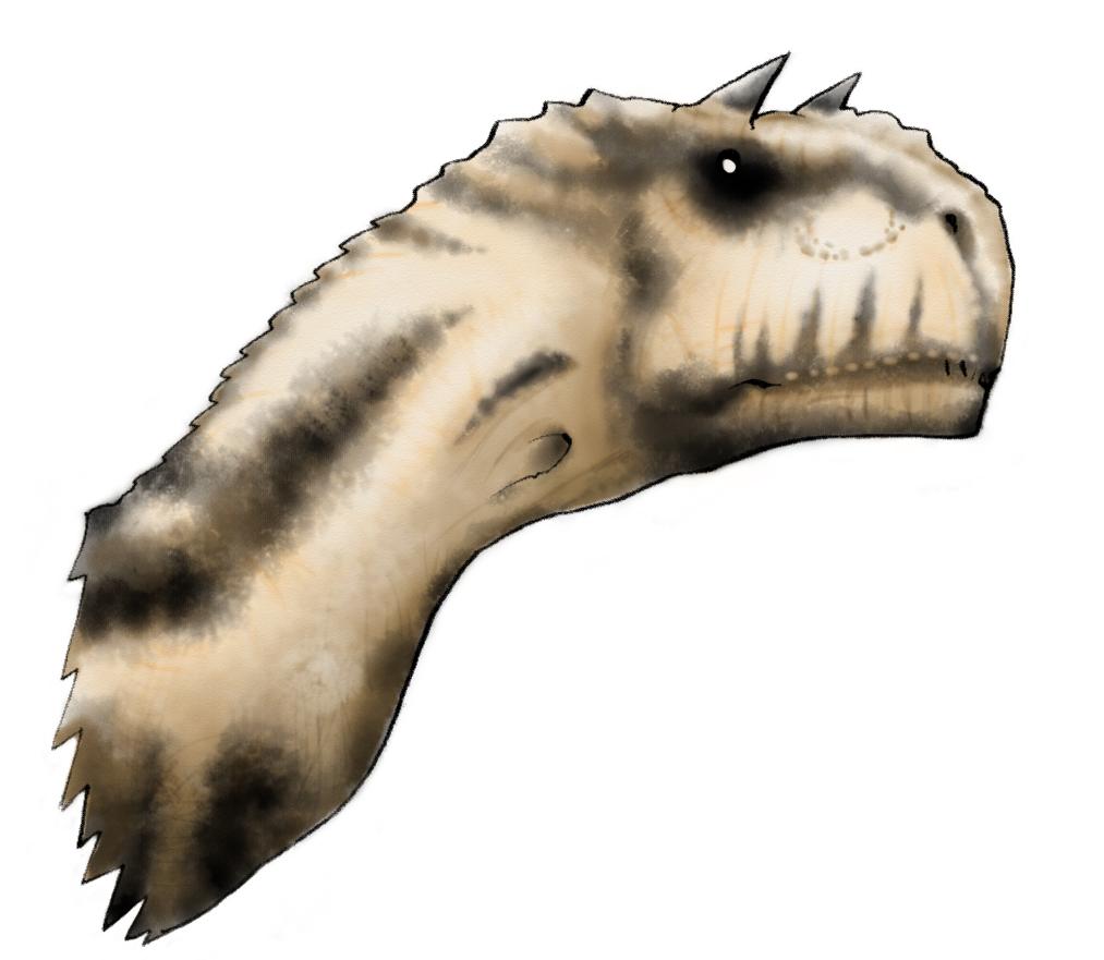カルノタウルス横.jpg