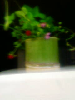 蛇イチゴ・れんげ草・他