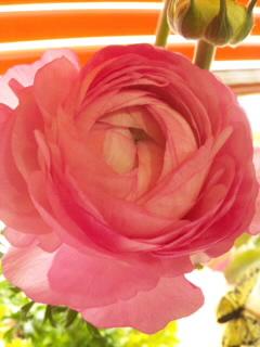 13日の花