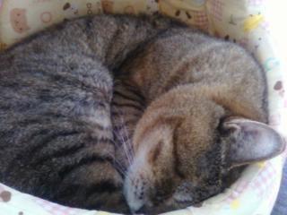 2010年6月18日ブログ掲載用-4.JPG