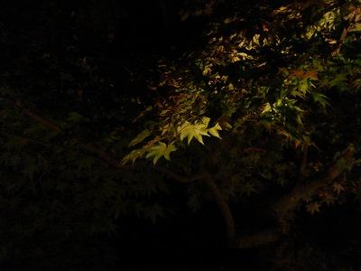 圓光寺の写真です。