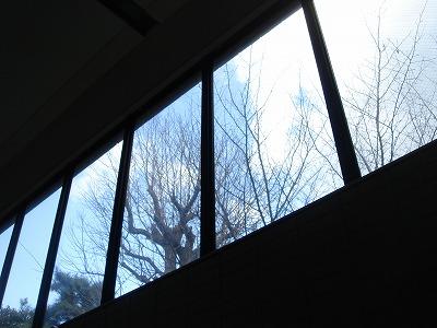 薬学部の窓から