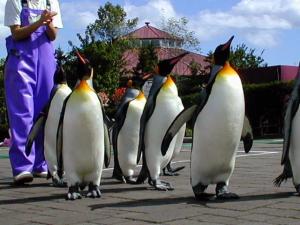 ニクスのペンギンサン