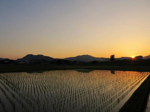 田園の夕景3.jpg