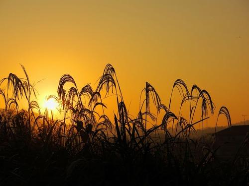 黒瀬 朝の風景3.jpg