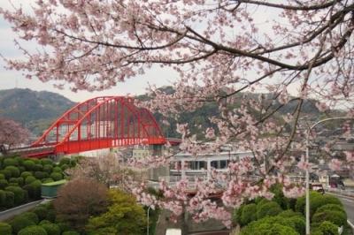音戸の瀬戸公園の桜.jpg