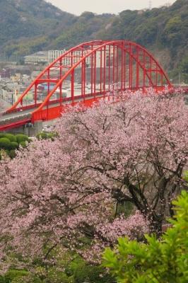 音戸の瀬戸公園の桜3.jpg