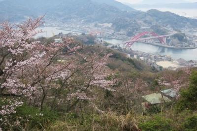 高鳥台の桜.jpg