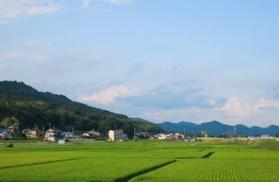 郷原の田園風景2.jpg
