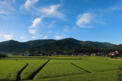 黒瀬の朝の田園風景3.jpg