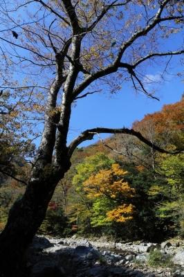 匹見峡の紅葉2.jpg