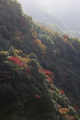 二級峡の紅葉5.jpg