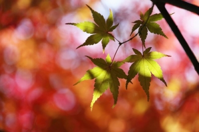 野呂山岩海近くの紅葉.jpg