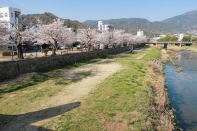二河側の桜.jpg