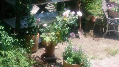 庭の花.jpg