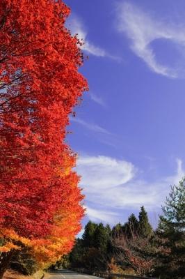 野呂山の紅葉.jpg