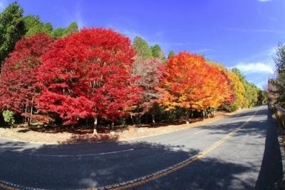 野呂山の紅葉2.jpg