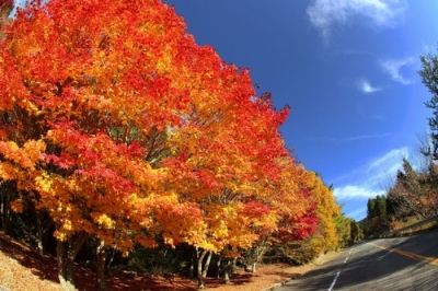 野呂山の紅葉3.jpg
