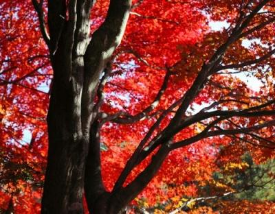 野呂山の紅葉4.jpg
