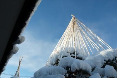 新雪の雪吊り