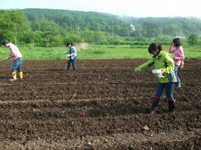 Planting Soba