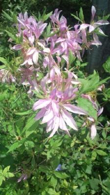 沿道の民家に咲く花