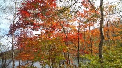 八千穂高原自然園