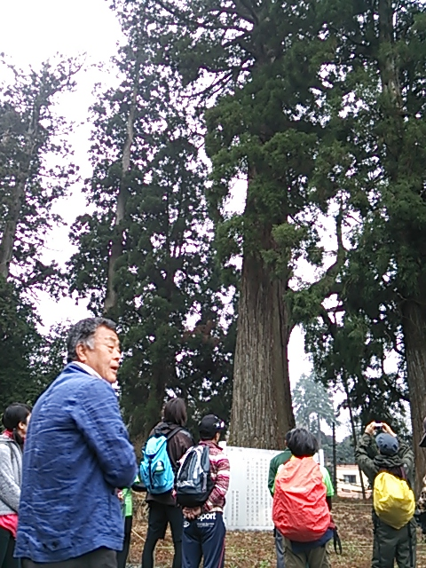 元村山浅間神社・ご神木