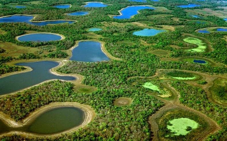 パンタナル(アフリカにある世界最大級の湿原)