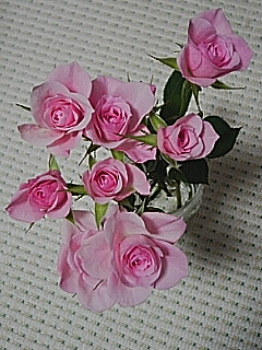 20060119_38988.jpg