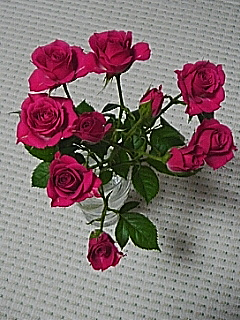20060206_54371.jpg