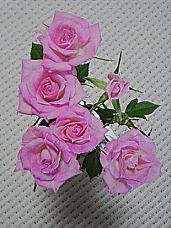 20060426_108129.jpg