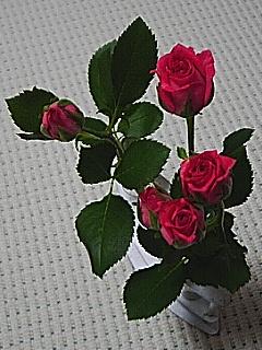 20060517_120184.jpg