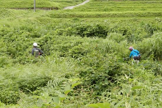 土手 草刈り