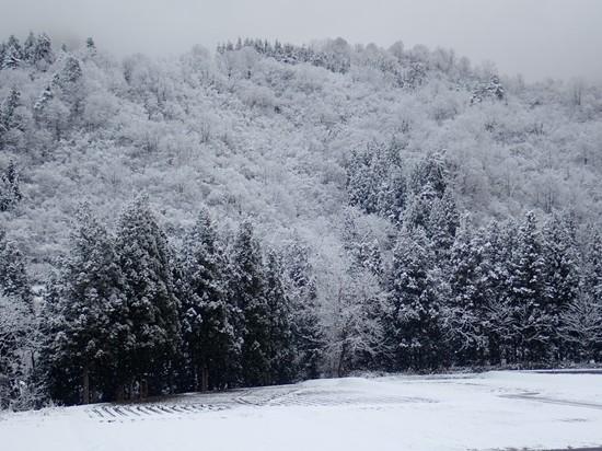 積雪 2020.03