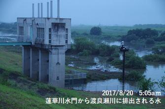 蓮華川水門から渡良瀬川に排出される水