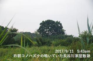 昨朝コノハズクの鳴いていた長谷川家屋敷跡