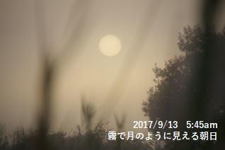 霧で月のように見える朝日