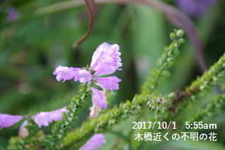 木橋近くの不明の花