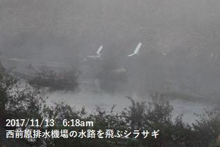 西前原排水機場の水路を飛ぶシラサギ