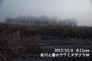 新川と霧のウワミズザクラ林