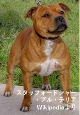 ジャレッド犬種
