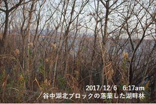 谷中湖北ブロックの落葉した湖畔林