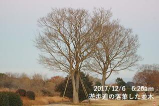 遊歩道の落葉した並木