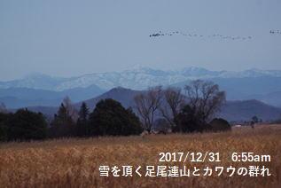 雪を頂く足尾連山とカワウの群れ