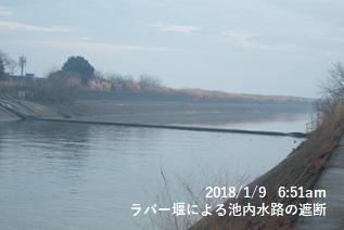 ラバー堰による池内水路の遮断