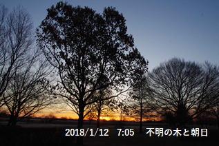 不明の木と朝日